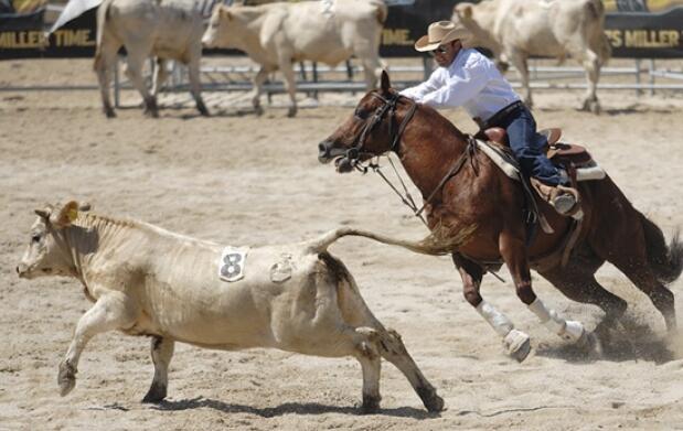 Barbacoa+paseo caballo+evento ecuestre