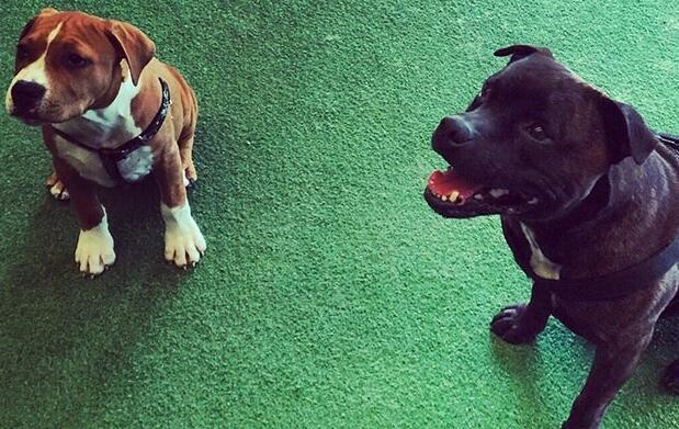 8 Clases de adiestramiento canino para cachorros