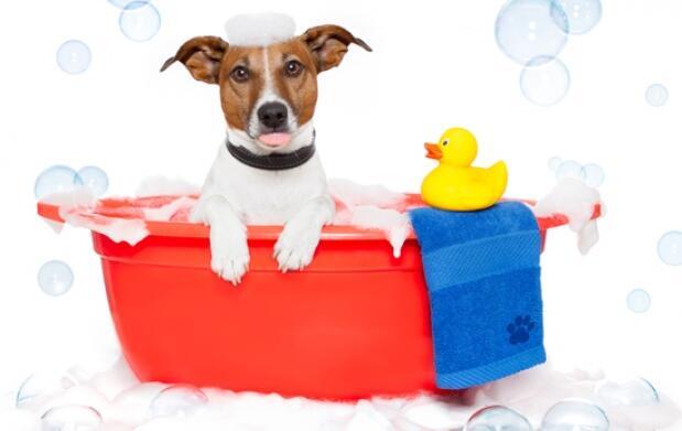Higiene completa para tu mascota