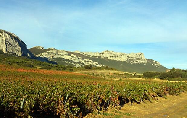 Vendimia en Rioja Alavesa + Pintxos