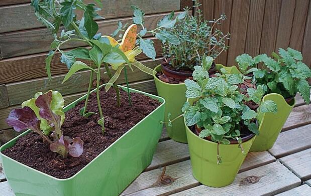 Huerto urbano en casa: tomate, pimiento…