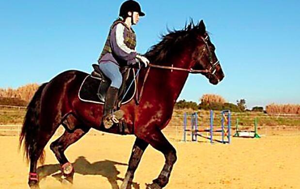 Clases de iniciación a la equitación