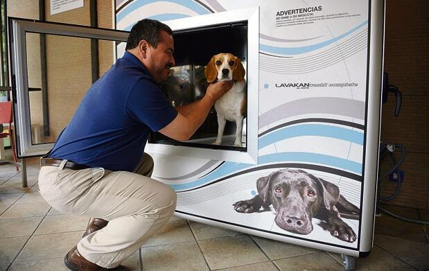 Lavado, desparasitado y secado (perros)