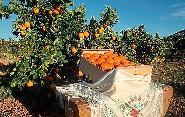 Naranjas Navel Powel 16 kgs. por 17,6€