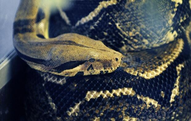Exposición de Reptiles vivos Barakaldo