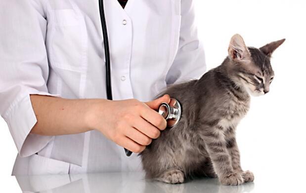 Vacunas (Protección para tu mascota)