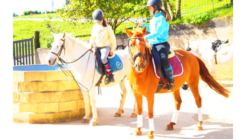 Granja escuela de caballos e inglés en Goikomendi