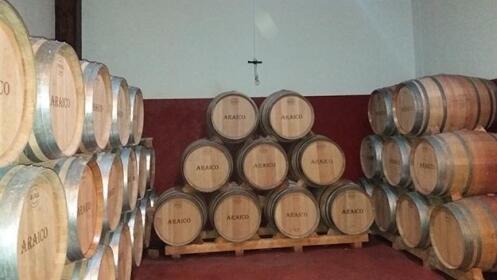 Cata de 3 vinos + picoteo en Villabuena