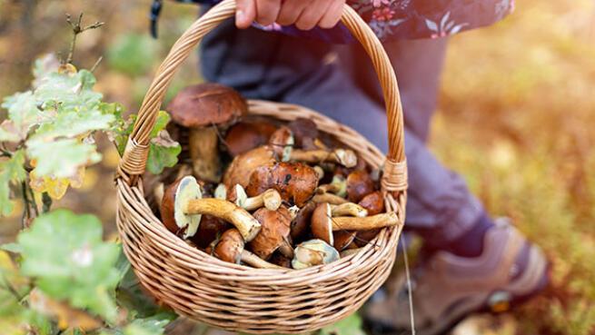 Descubre el mundo de las setas y de los hongos en familia