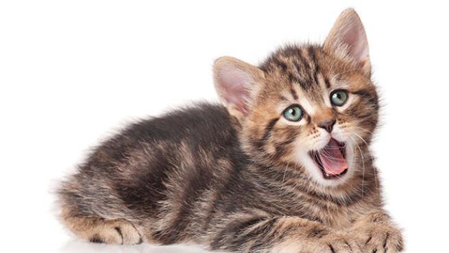Limpieza bucal para perros y gatos