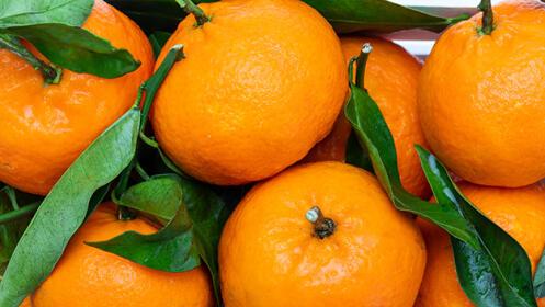 Caja de mandarinas de 10, 15 o 20 Kg